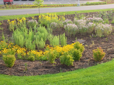 yellow and green plants in a garden near a lake and a parking lot