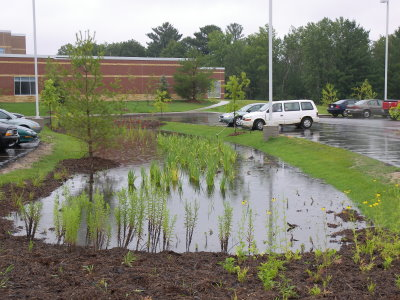 water pool in the rain garden