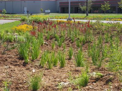 Freshly planted garden at ARMC