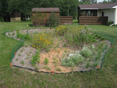 A freshly planted rain garden with green plants