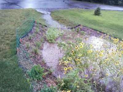 A rain garden with yellow plants