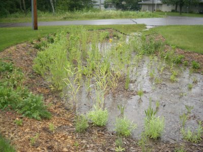 A rain garden filled with water